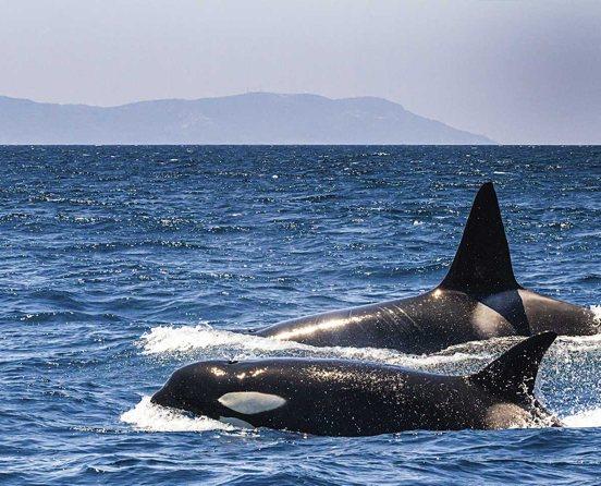 Whale-Watching - Tarifa